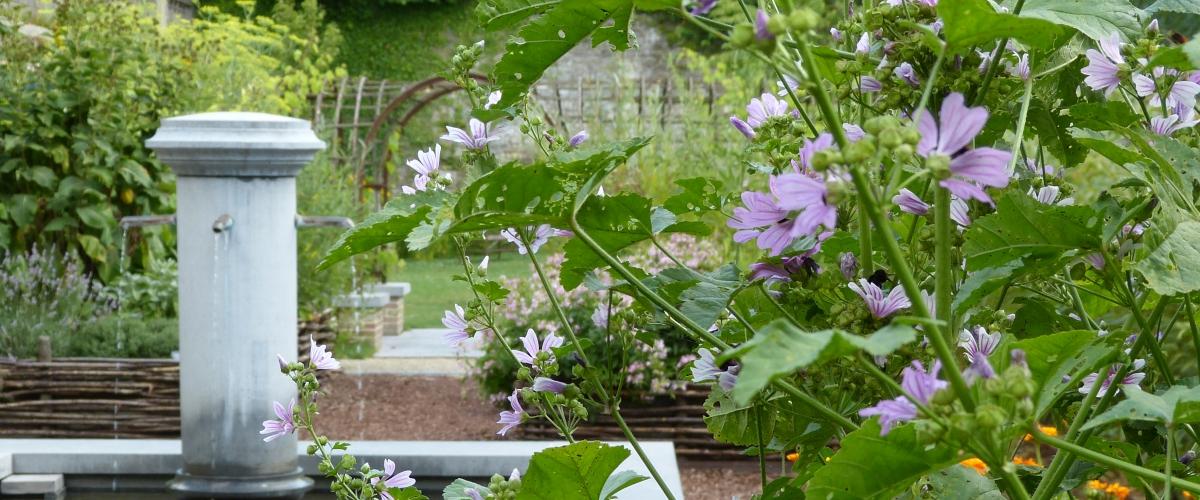 Un jardin de plantes m dicinales waw magazine for Jardin 700m2