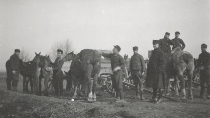 Cheval de guerre - artillerie 017