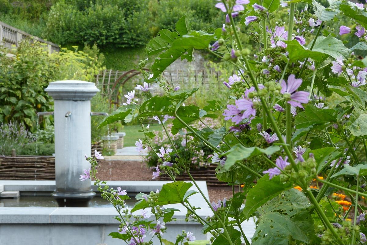 Un jardin de plantes m dicinales waw magazine for Jardin hildegarde